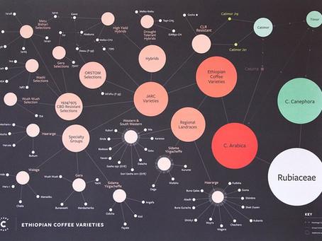 [COFFEE TIP] Cà phê 'Heirloom' thực sự là gì?