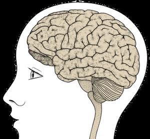 HighBrows hlava