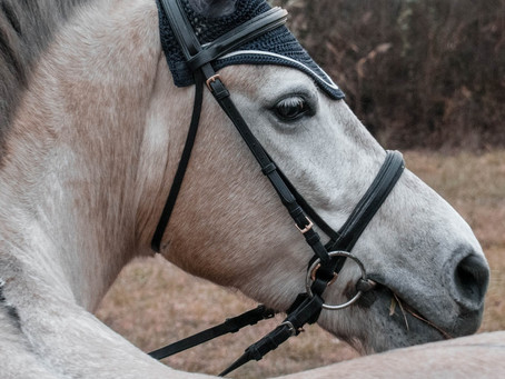 How to tack up a horse: English