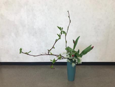 いけ花・小原流 お稽古で春のお花を