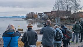 2 Kurstage am Bodensee im Banne der Möwenbestimmung