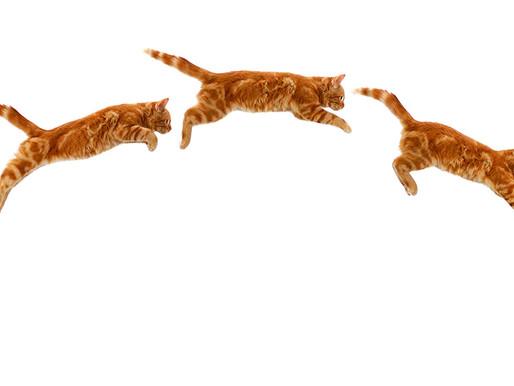 Part 1: Cat-Like Focus