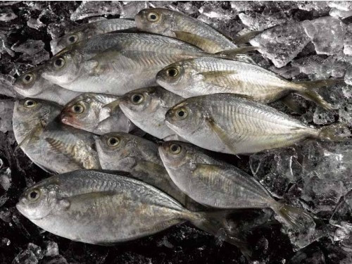 fish, butterfish, on ice