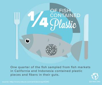 plastic in fish