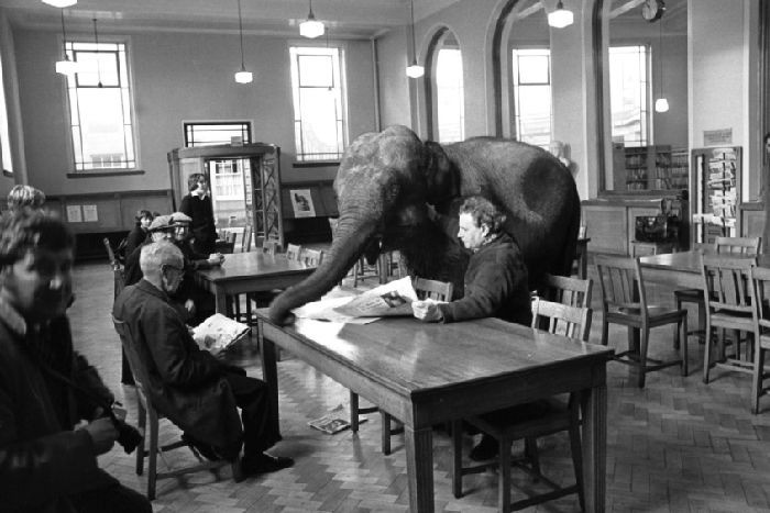 A black and white photo from the 70s of a baby elephant visiting the reading room at Leith Library