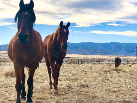 Corral Update: New Horses
