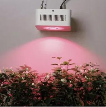 Cómo elegir la mejor luz para tu cultivo indoor