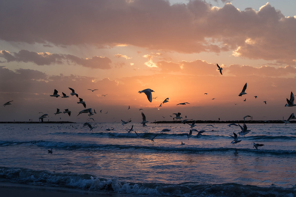 beach-birds-clouds-dawn-dusk-island-1519