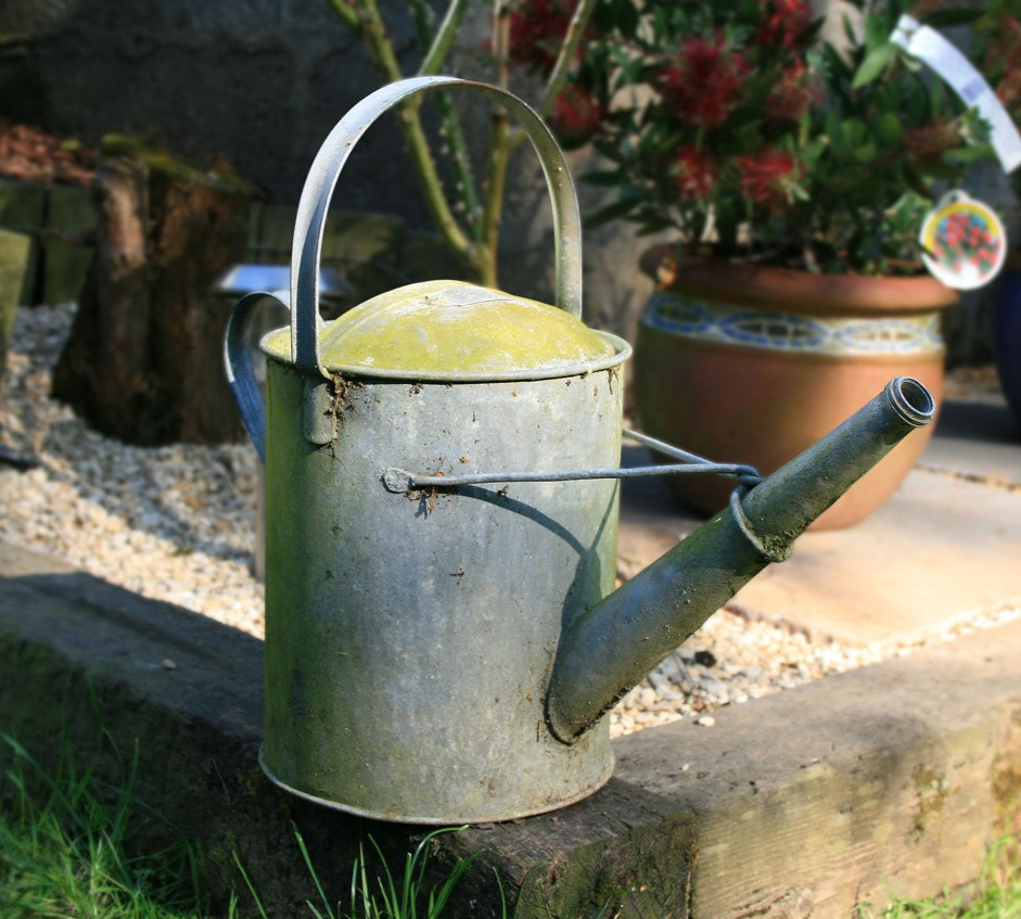 watering can. How to water tomatoes correctly.