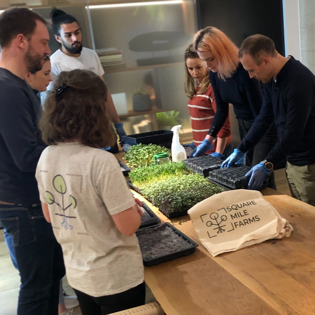 How to grow microgreens employee engagement workshop