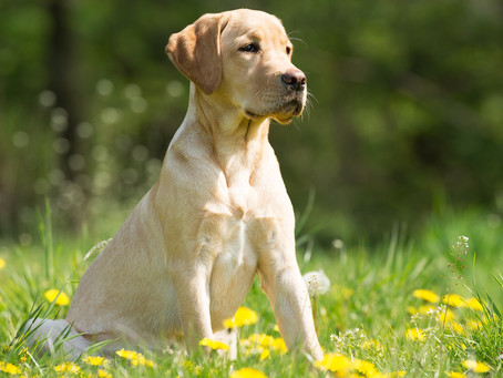 Stop That Itch: Helping Your Pooch Overcome Allergies