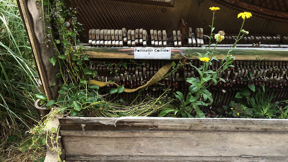 New plant growth in a decaying piano