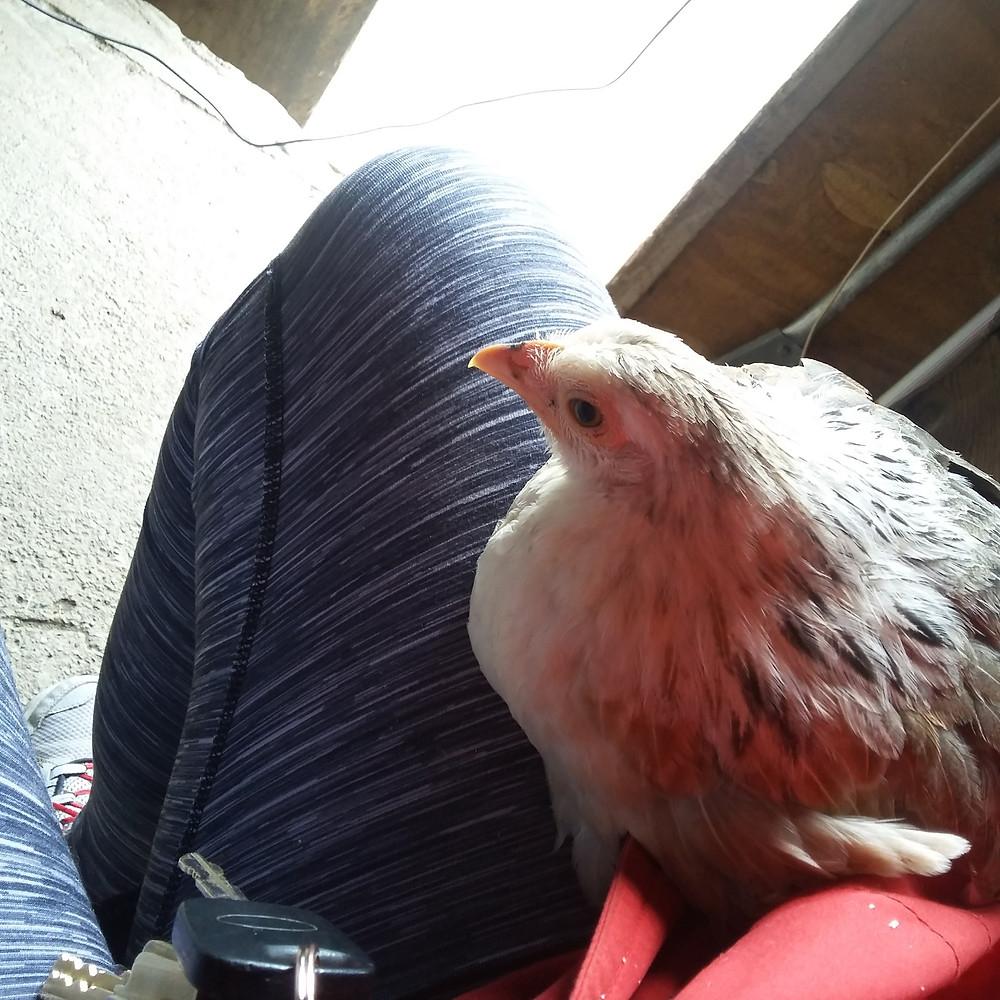 Dory on my leg