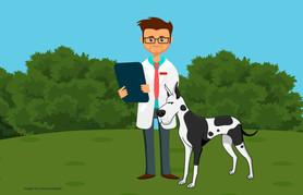 Residência veterinária: a melhor fronteira entre a sala de aula e a rotina clínica