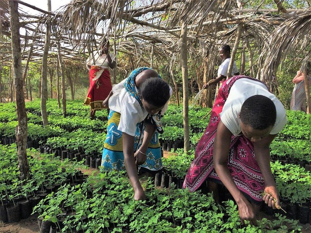 Women bending to tend to plants in a nursery.