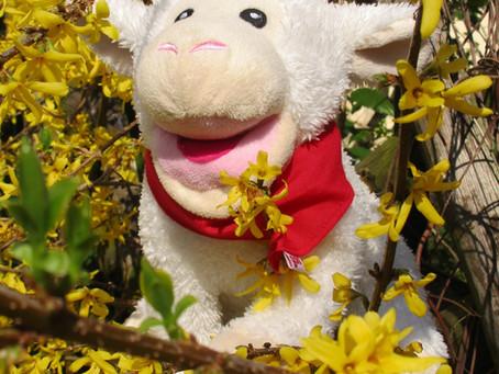 Wolli fängt den Frühling
