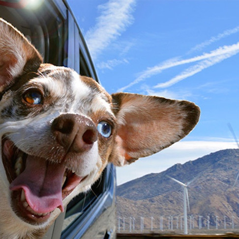 How to Help Your Dog Overcome His Fear of Car Rides