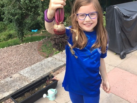 Lottie (2SM) has been growing vegetables in her garden.