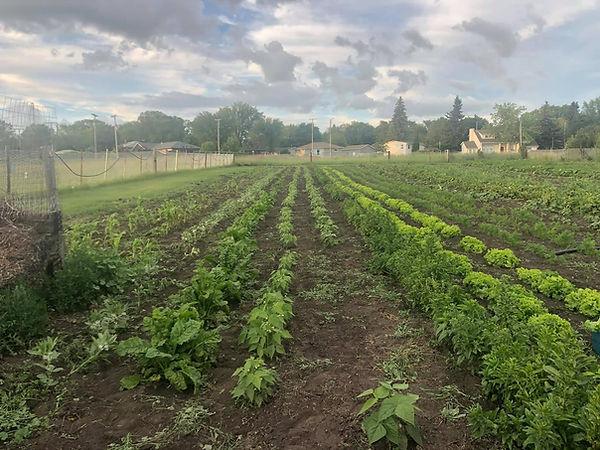 Midwest Food Resource community garden