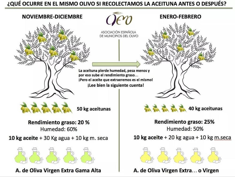 (Bild: aemo Facebook) Olivenernte in Spanien - evoo ag