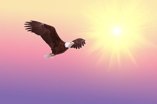 La Transformación del Águila: ¡Renovarse o Morir!