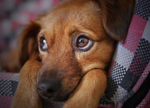 7 Tips for Adopting Your First Pet