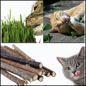 Diferença entre Catnip, Valeriana, Erva para gatos e Matatabi