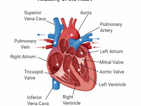 Electric (Heart) Beats
