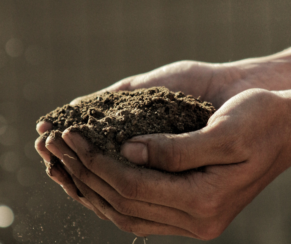soil for blueberries