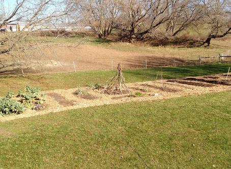 Preparing A No-Till Garden Bed