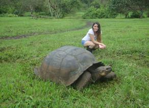 Viajar a las Islas Galápagos: re-descubriendo las especies