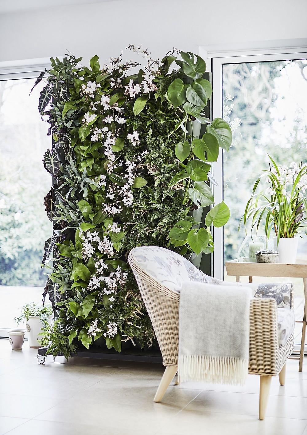 Green wall vertical garden indoors