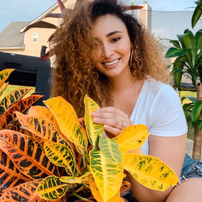 5 Beginner Houseplants That Even You Cant Kill