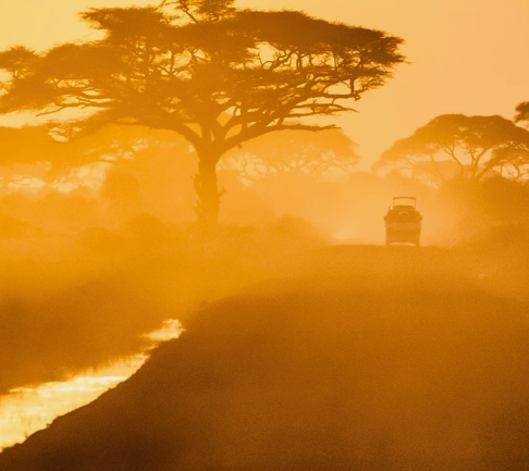 Safari Into The Wild In East Africa  with Travel Wild