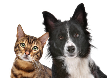Cats and dogs debate