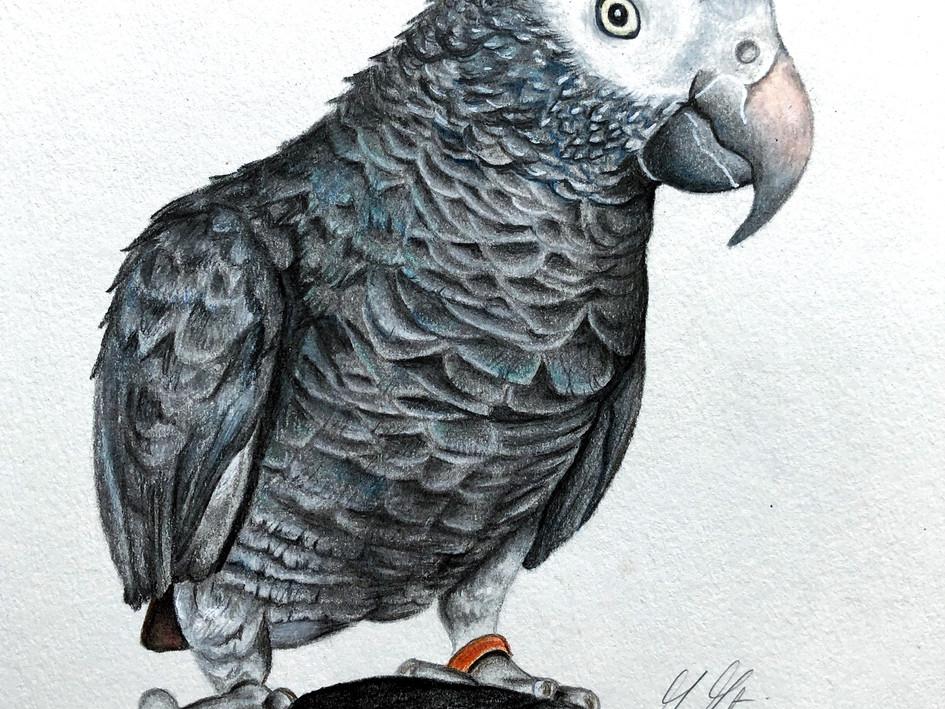 Parrot Commission