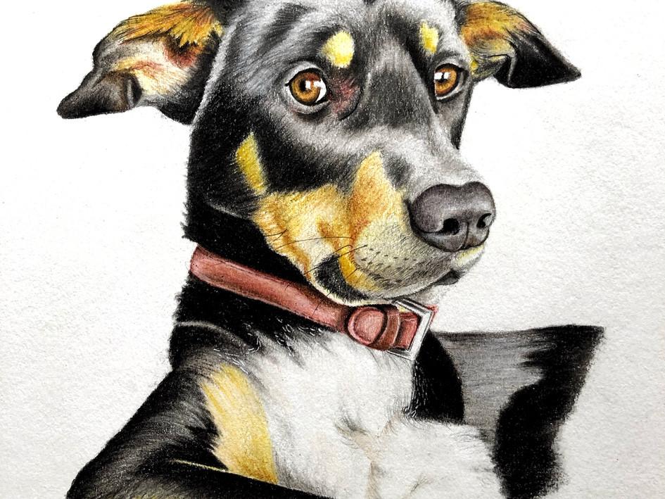 Dog Commission - Jack