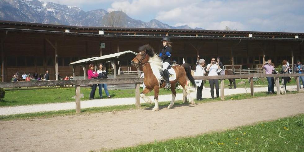 Hausturnier Alps Coliseum