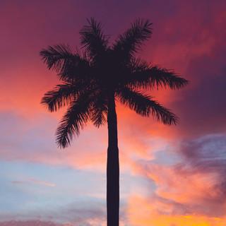 Miami WEBSITE-9_edited.jpg