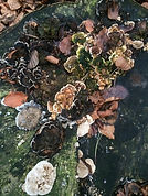 winter fungi.JPG
