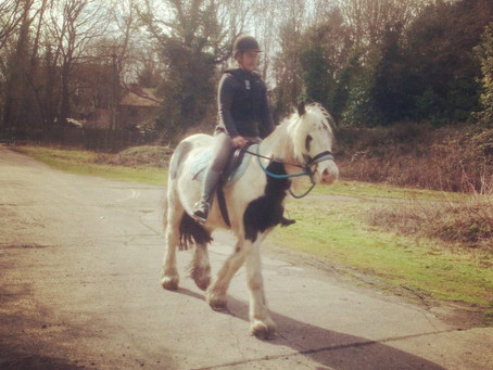Sir Blue's First schooling session.