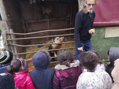 Meeting the animals and lamb feeding with Schools