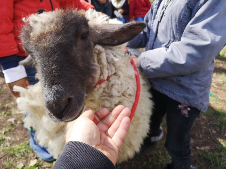 Countrylife Curriculum Days with Primary Schools