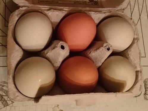 Fertilised Eggs for Incubation