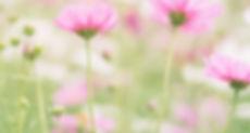 Bellecare-Naturkosmetik-Anti-Aging.jpg
