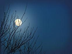 moon_17555bc (1).jpg