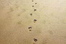 footprint-1021452_1920.jpg