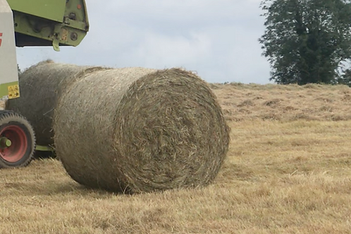 Organically grown meadow hay large round