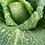 Thumbnail: Magners Farm Organic Cabbage