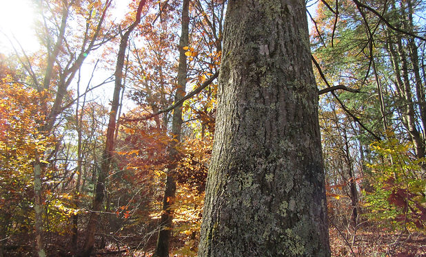 Tree Communication .JPG